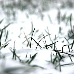 see and rate{gras met sneeuw}
