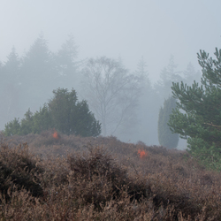 Heide en mist 2