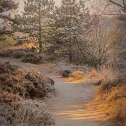 winterse morgen in opa's duin
