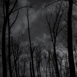 Levenloze bomen