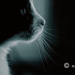 Mijn kat Gerard