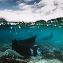 Reef Manta split shot