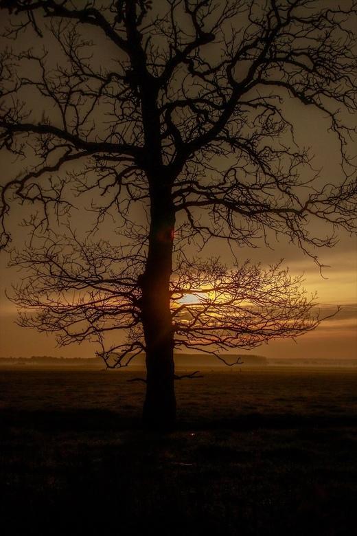 Zonsondergang achter een boom -