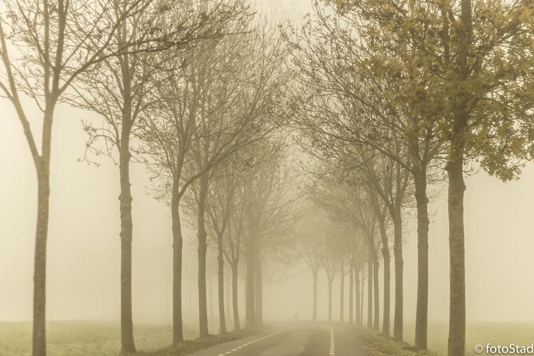 Mist..... - fascinerend ; hoe mooi mist kan zijn