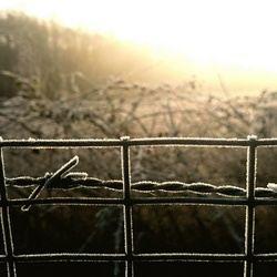 focus on the barbed wire