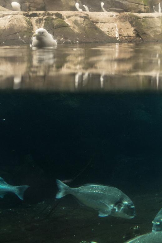 Meeuw en vis
