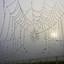 Spinnenweb in de mist