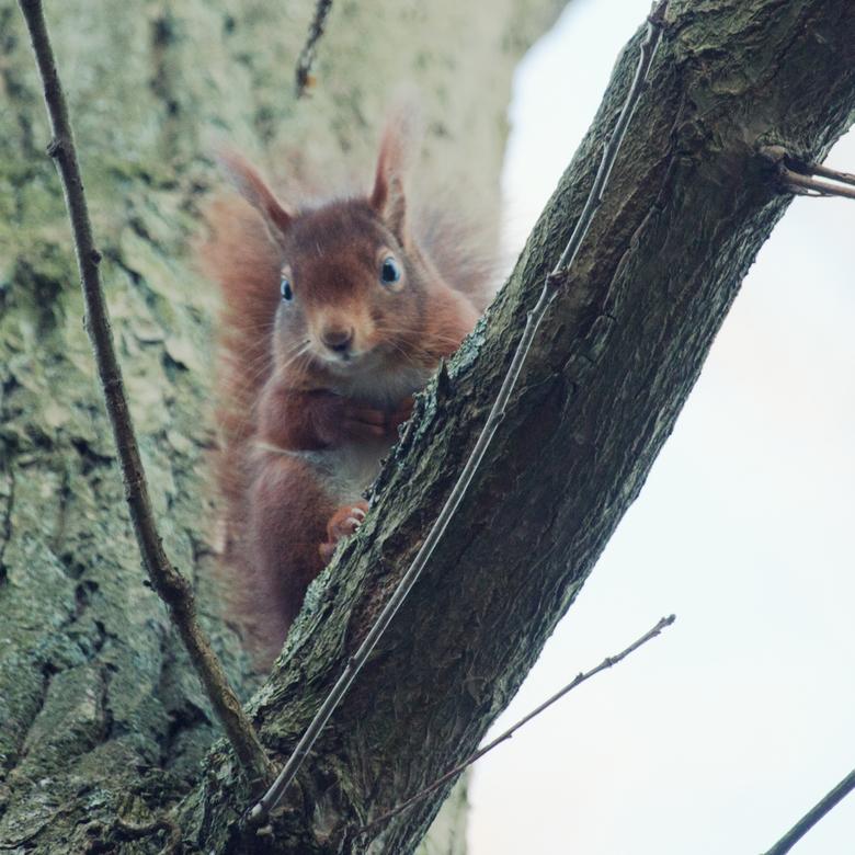 What's happening... - Deze ochtend er vroeg uit, ondanks de temperatuur, mooie dieren op de foto kunnen zetten. Fijn weekend!