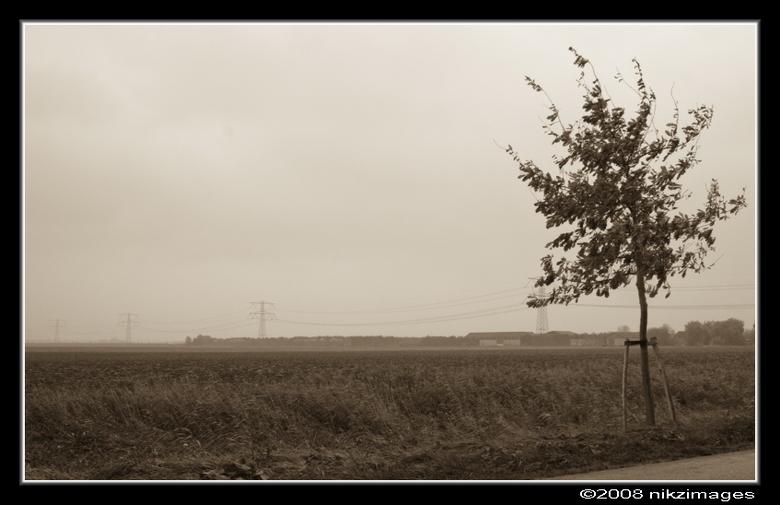 """herfst in de polder - Foto is genomen in het gebied """"De Elsen"""" in de dordtse biesbosch."""