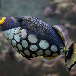 Blub ik ben een vis