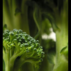 Brocolli forest