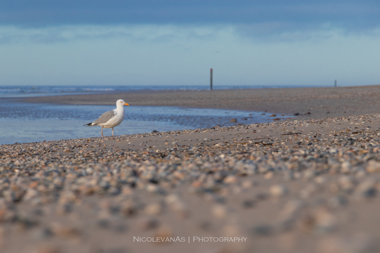 Sand. - Laag standpunt aan zee.<br /> Texel.