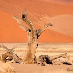 Rode woestijn