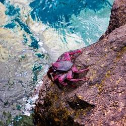 Zee Krab