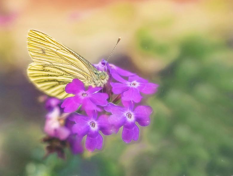 vlinder - heerlijk, ik mag weer een beetje typen op de pc<br /> dus kan ook weer wat reageren<br /> iedereen een fijn weekend gewenst