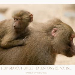 Hup mama hup...