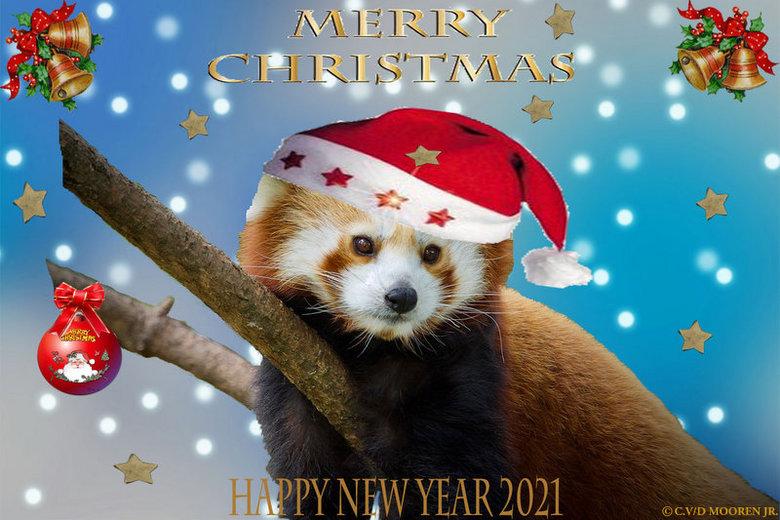 Rode kerst panda - Kerst Panda Beertje wens jullie allemaal <br /> Vrolijke kerstdagen &amp; een gezond 2021.<br /> <br /> Cor v/d Mooren jr.<br />