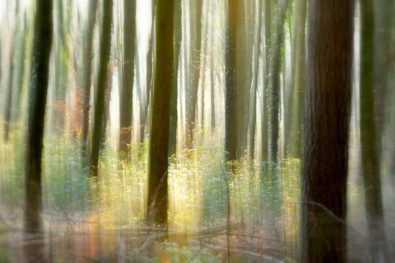 Dancing trees... -
