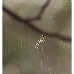 web-sterretje