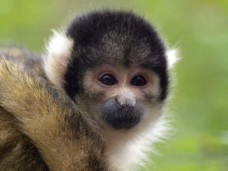 Doodshoofdaapje - Zaterdag met een fijn en leuk groepje naar Apeldoorn geweest.<br /> <br /> Dit aapje is tegen het licht in genomen, en wilde het w