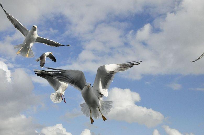 Boot Texel Den Helder - Birds