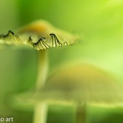 paddenstoel -14