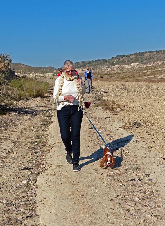 Hond uitlaten - Ook honden gaan soms mee op de wandeling. deze bracht trouwens z'n vrouwtje ten val door voor haar voeten te gaan lopen. Alles le