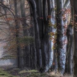 Herfsttinten in het mistige bos