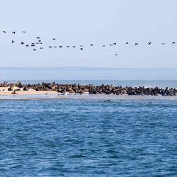 Namibië: zandbank bij Walvis bay