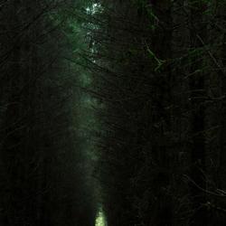 Het heksenbos