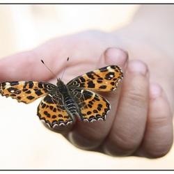 vlinder op de hand
