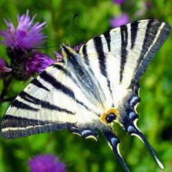 Vlinderpracht