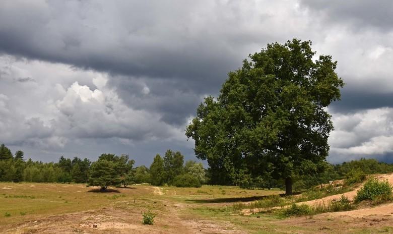 Zwaar bewolkt - Een plaatje van een paar weken geleden, donkere wolken boven Boswachterij Dorst.