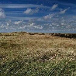 De duinen van Hollum