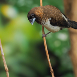 Tropische vogel 2