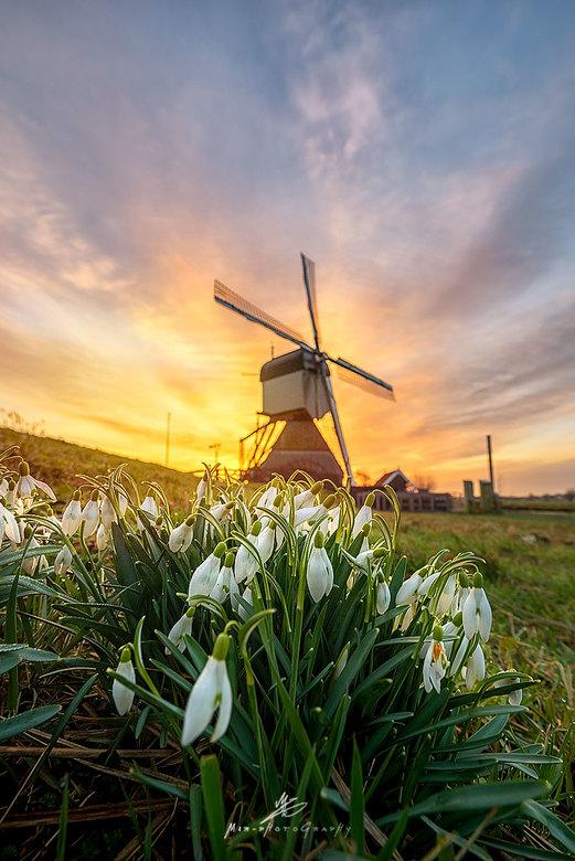 Voorjaar 2017 - Vanmorgen het voorjaar in beeld gebracht.