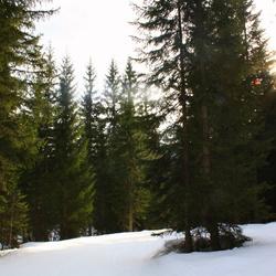 De zon schijnt door de bomen...