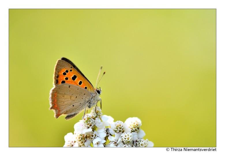 Butterfly Beauty - Zit als een bruidje zo mooi op haar witte boeket. Wat heerlijk die zoomdag zo tussen de vlinders!