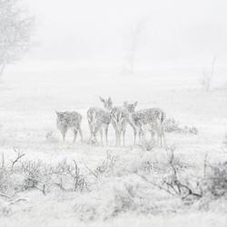 Winter op de awd