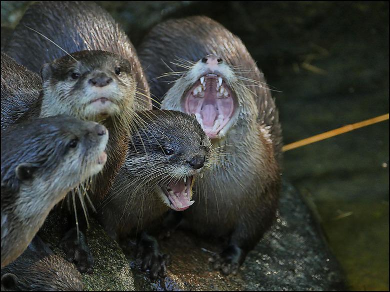 Afstand houden. Niet knuffelen!!!!!!!!!!! - Niet knuffelen, schreeuwde die otter naar me, alsof ik dat wou. En ik wou dat helemáál niet.... kan het wo