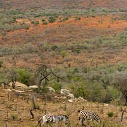 Zuid Afrika 22