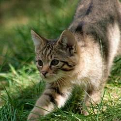 Wild kitty cat