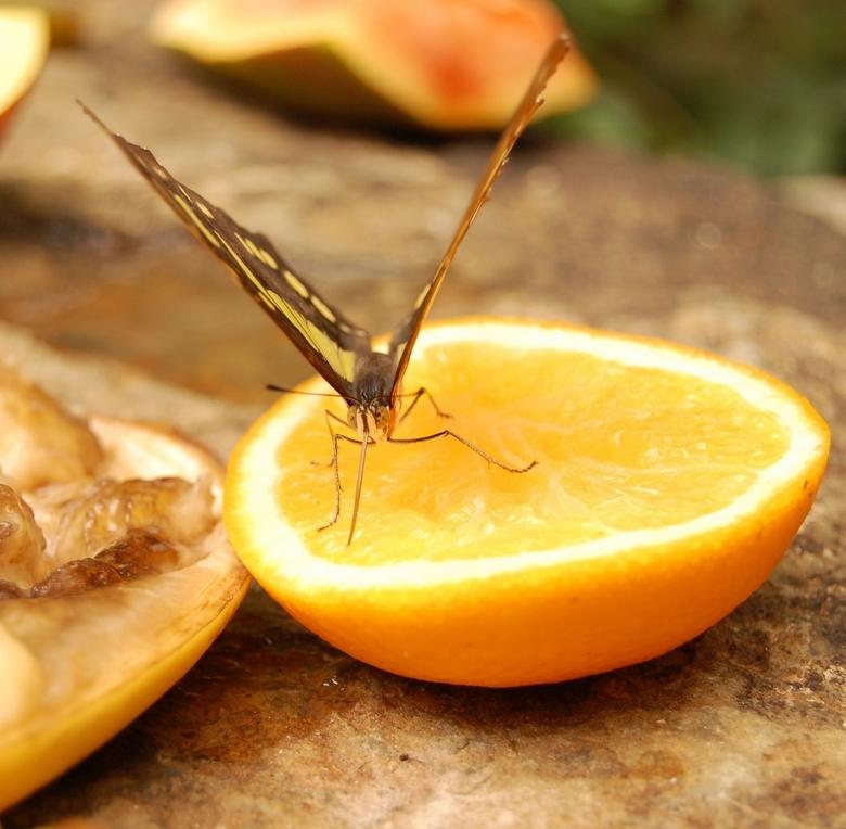 Tasty Orange - ...