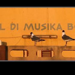muziekschool bonaire