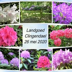 collage   landgoed Clingendael   26 mei 2020