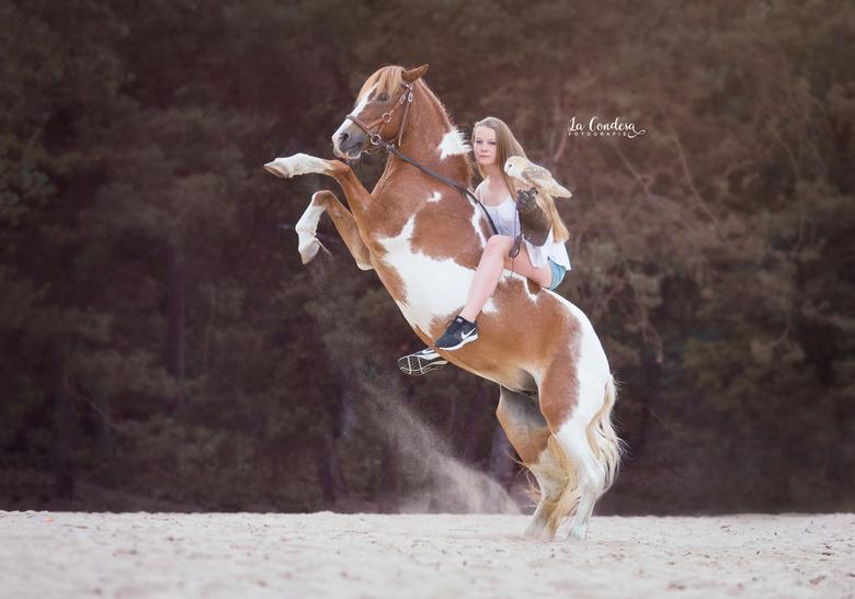 A horse, a girl and an owl -