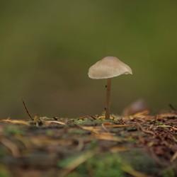 De eenzame kleine paddenstoeltje