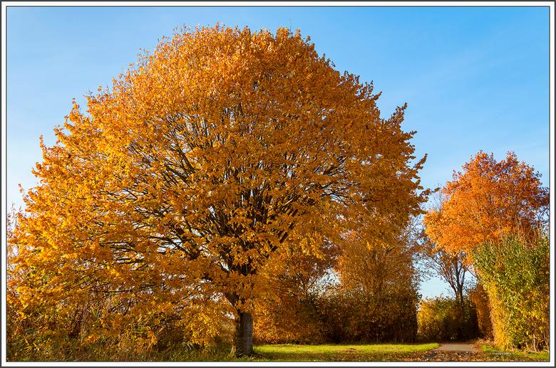 herfst - herfst in het land van Heusden&Altena