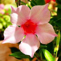Vandaag is roze