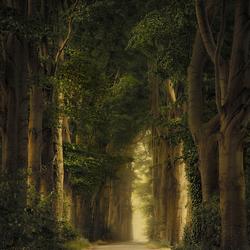 Pillars of nature